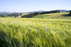 Wunderschönes Feld (pp)