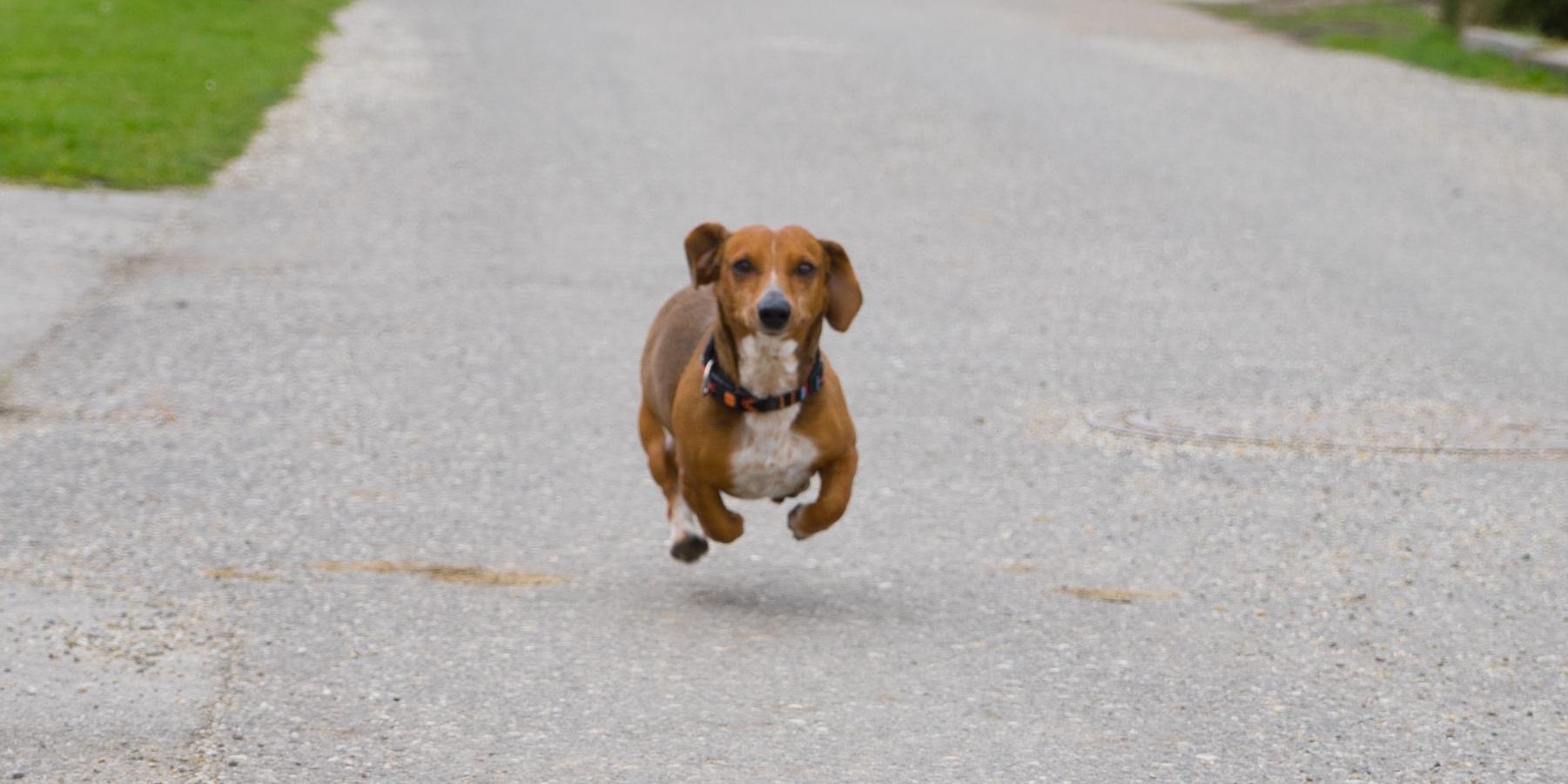 Tractive GPS & Tractive Dog Walk
