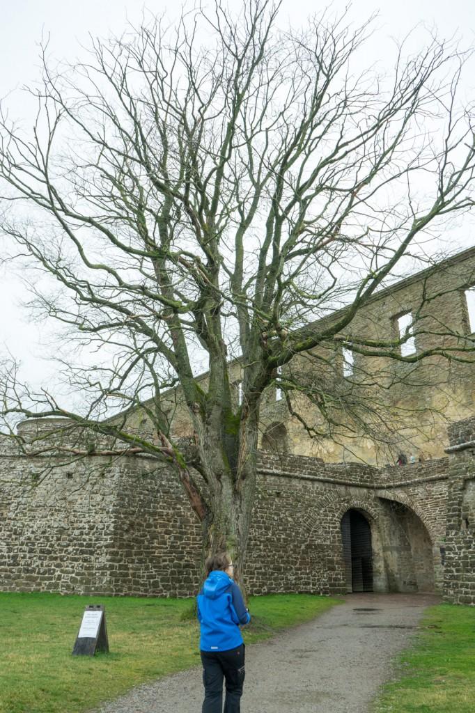 Schloss Borgholm (pp)
