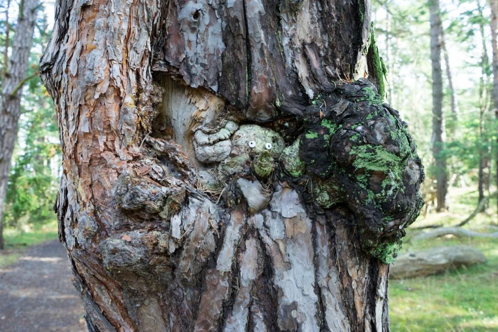 Ein lustiger Baum im Trollwald (vh)