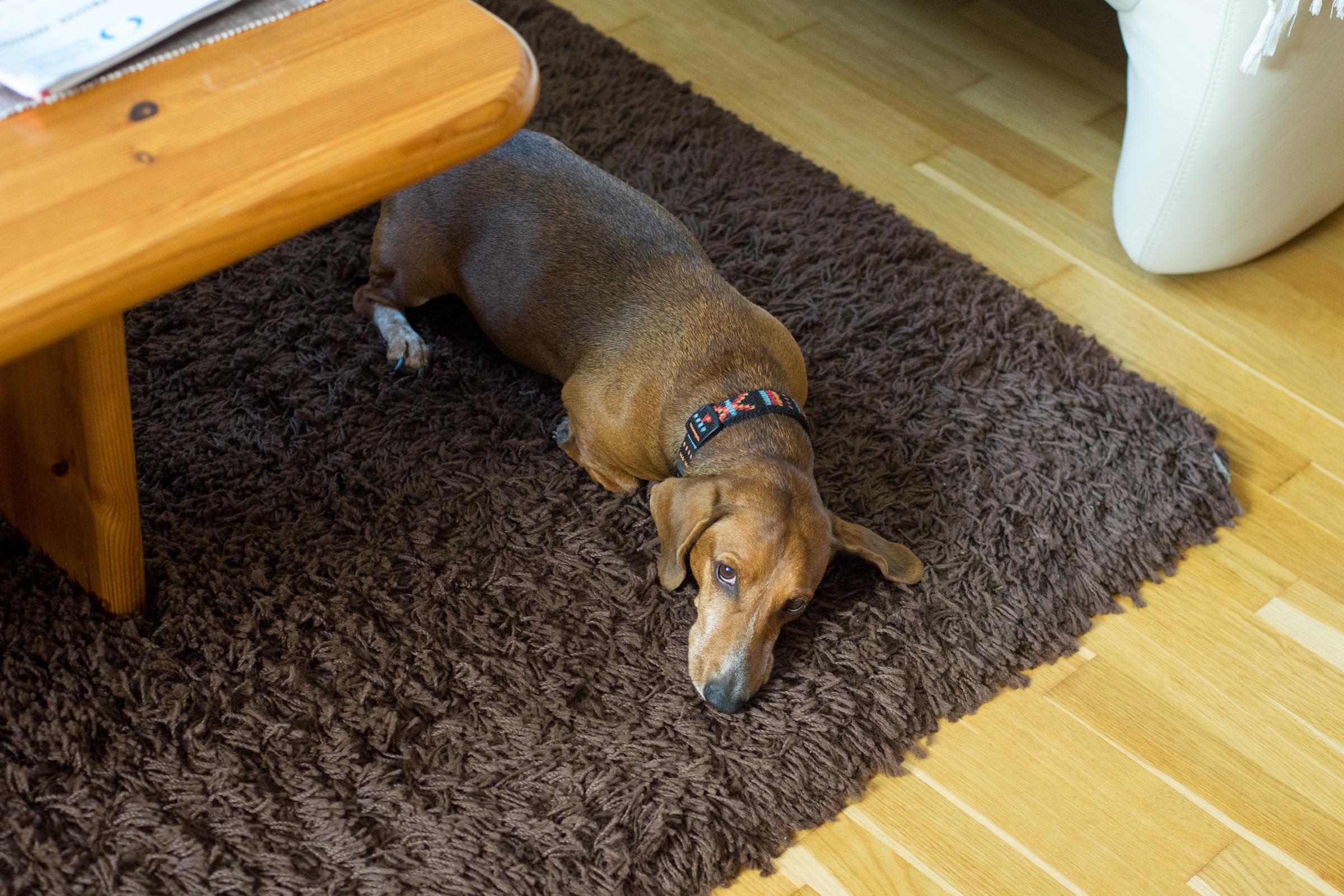 Zwischendurch mal mit Decke oder Teppich kuscheln! (pp)