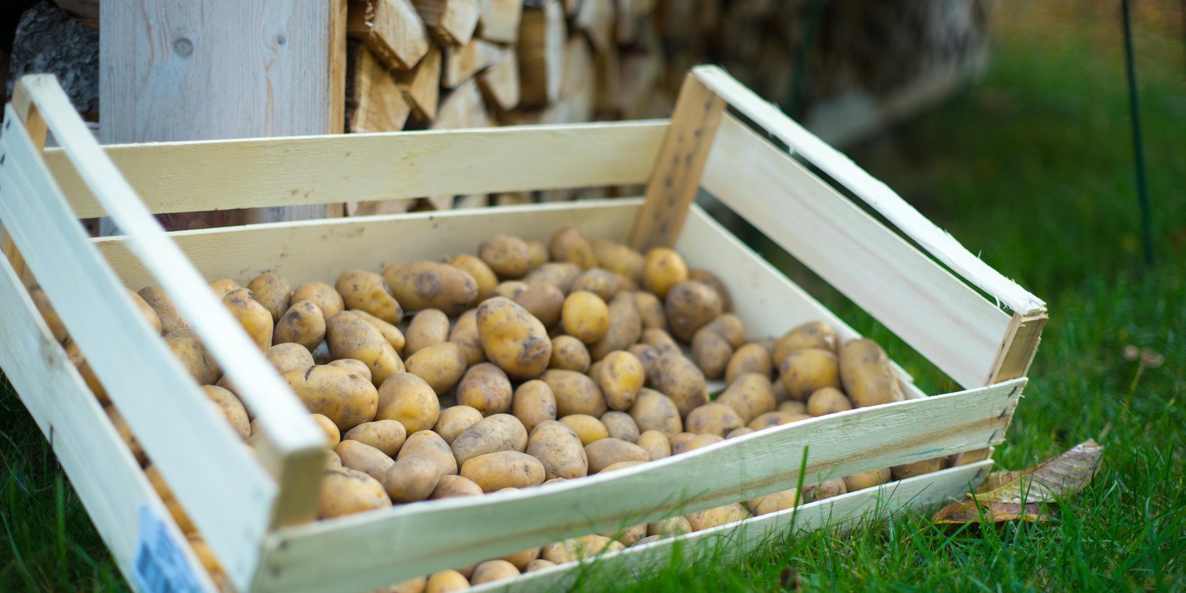Jause für Erdäpfel und Kräuter Fans