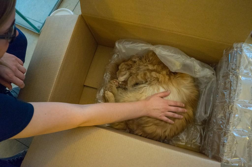 Crazy Cat Lady streichelt Moritz (pp)