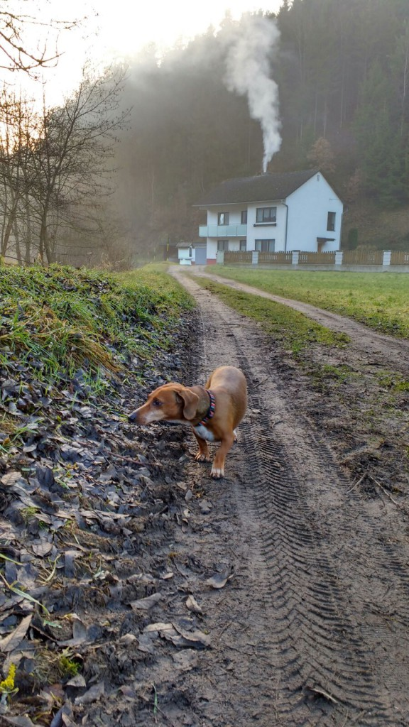 Picture 11: Muddy road with dog.