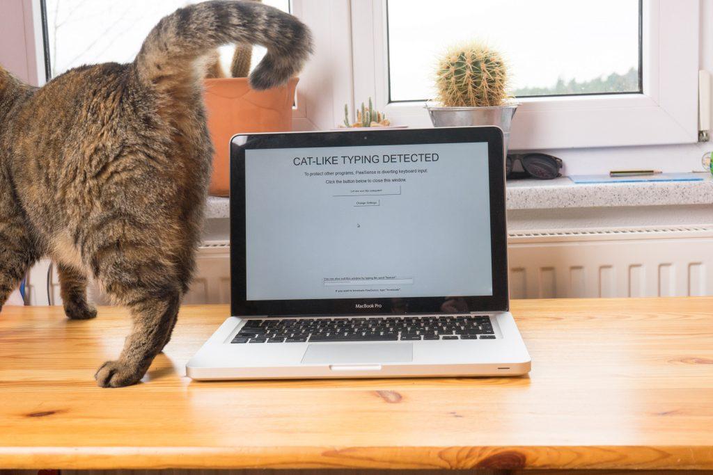 Das Programm hat die Katze sofort erkannt. (pp)