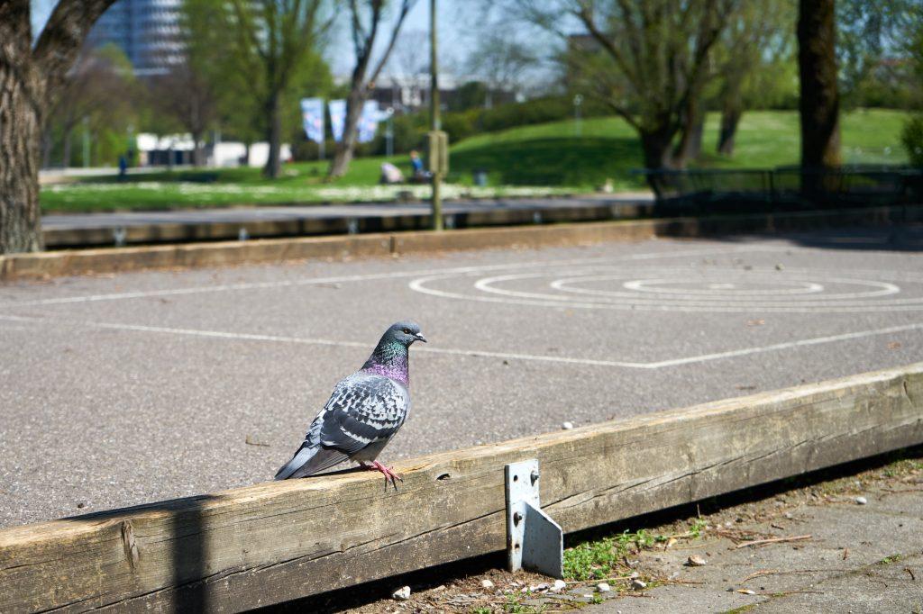 Im Olympiapark waren viele Tauben, Enten und andere Vögel unterwegs.