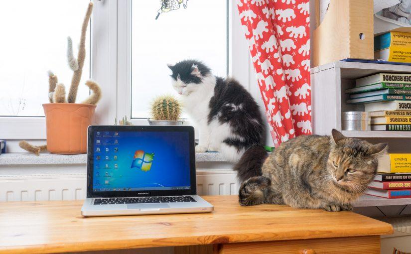 PawSense: Den Computer vor Katzenpfoten beschützen