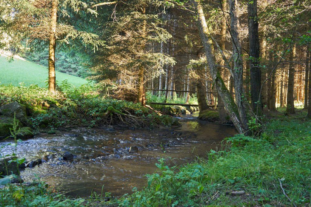 Die Natur am 10-Mühlenwanderweg.
