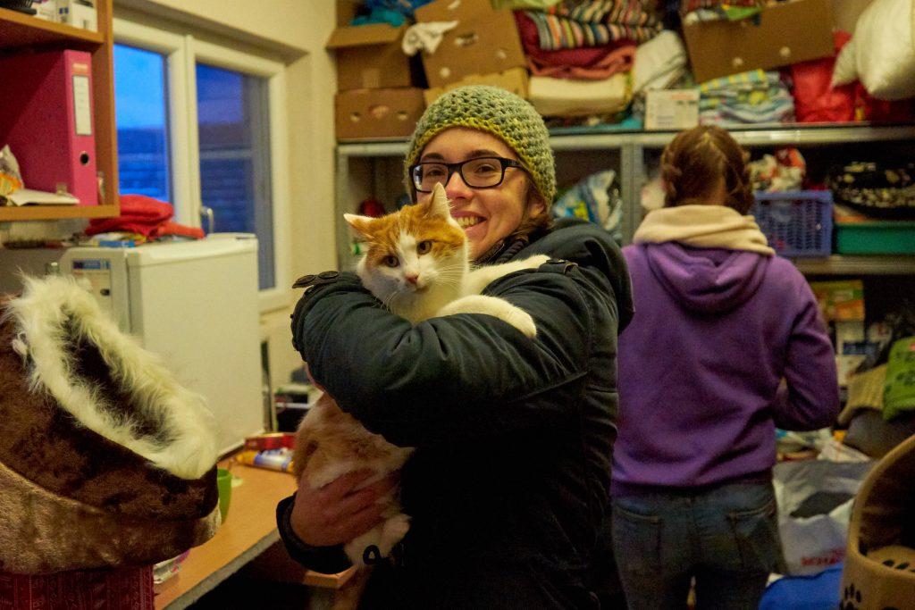 Eine der lieben Katzen im Tierheim Freistadt.