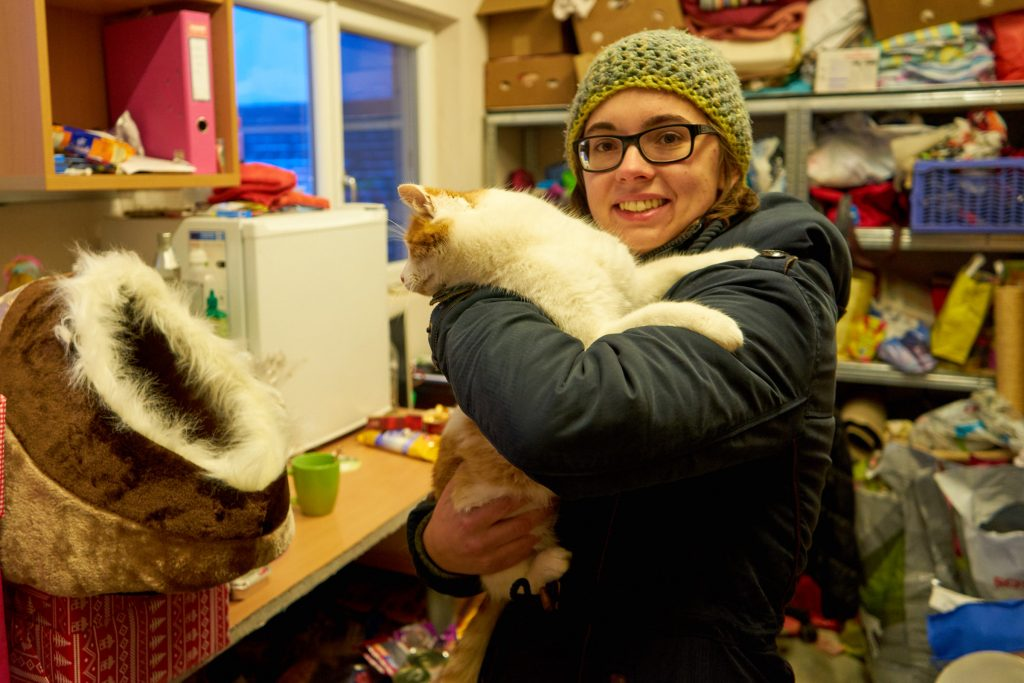 Eine der lieben Katzen im Tierheim begutachtet die Kuschelhöhle.