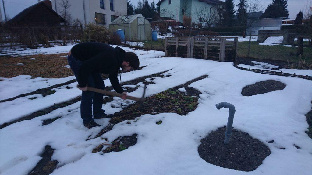 Patrick beim Ausgraben der Pastinake.