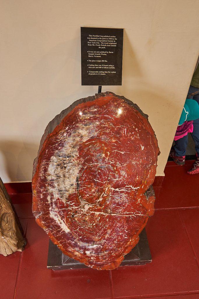 Ein versteinerter Baum im Museum.