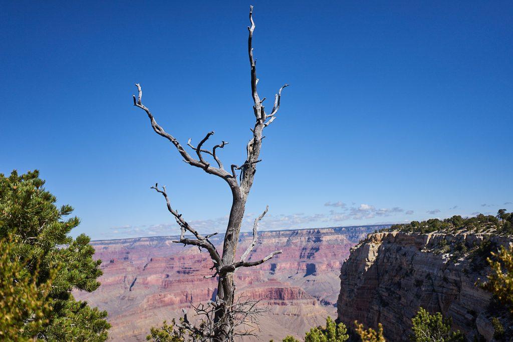 Ausblick in den Grand Canyon