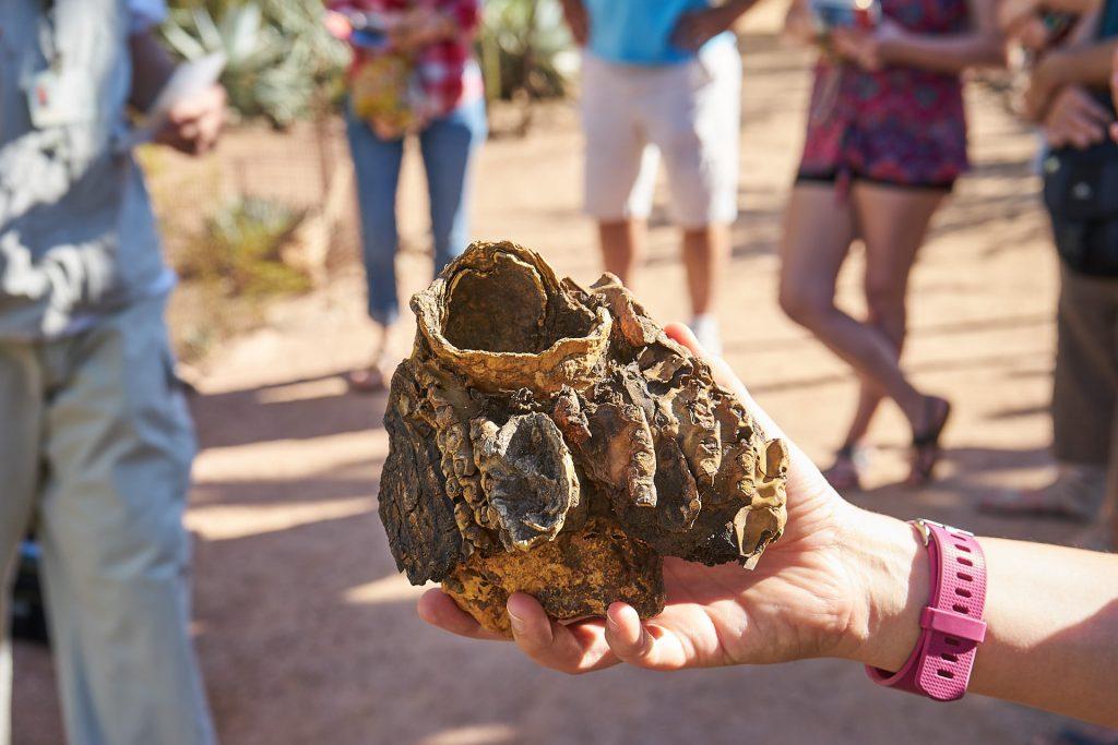 Ein eingetrocknetes Vogelnest aus einem Kaktus