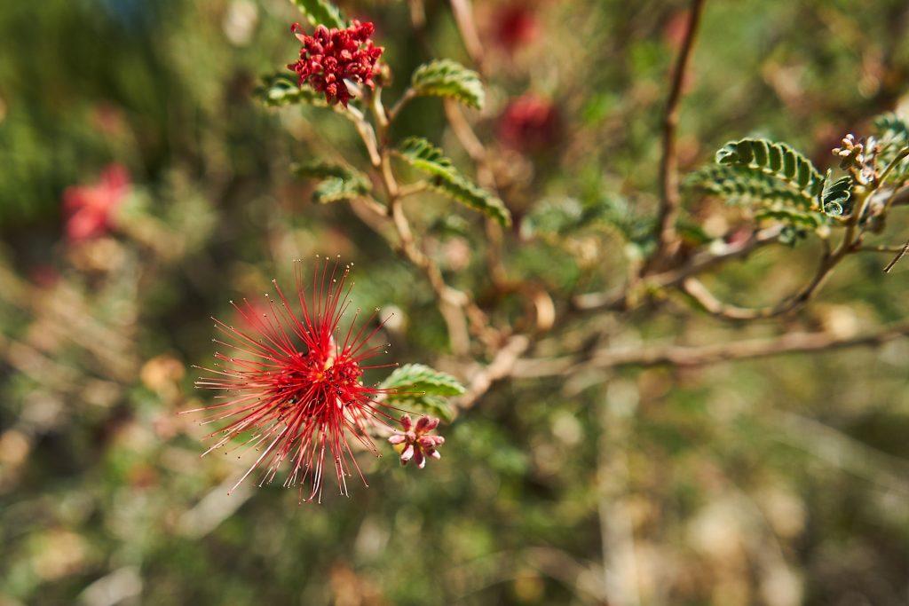 Eine rote Blume.