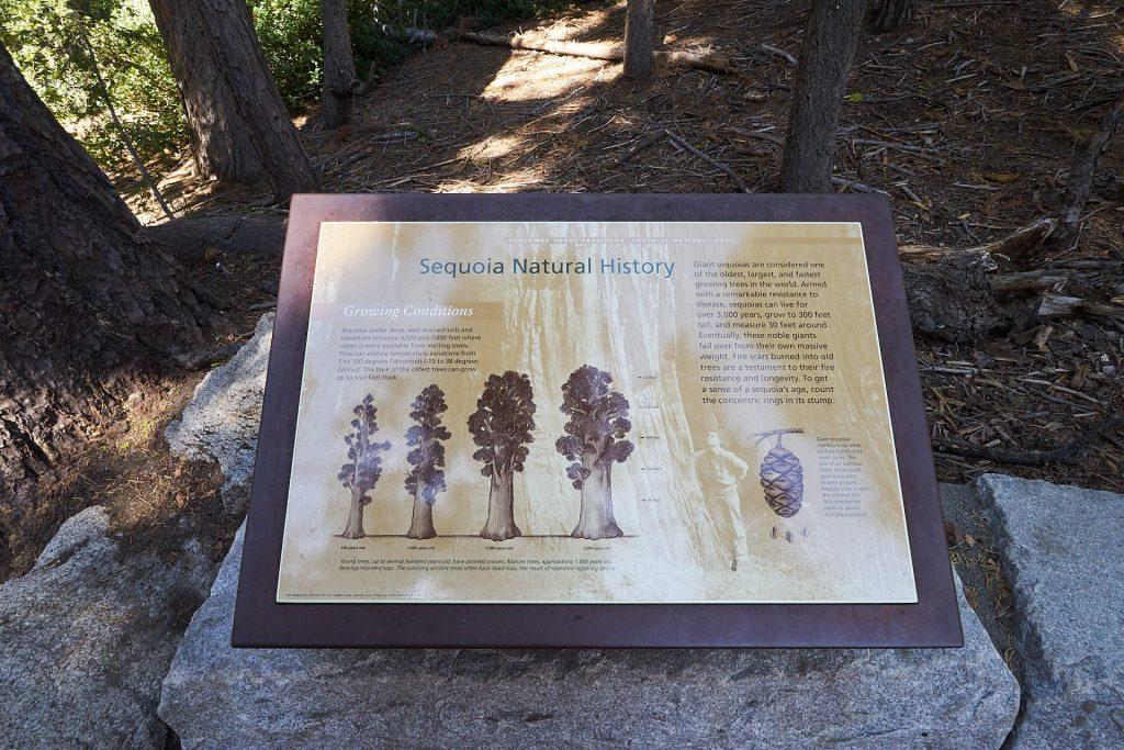 Schild mit Erklärungen zum Sequoia-Baum.