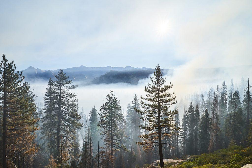Ein paar Bäume und Rauchschwaden.